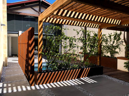 cour-moderne-pergola-plante-grimpante