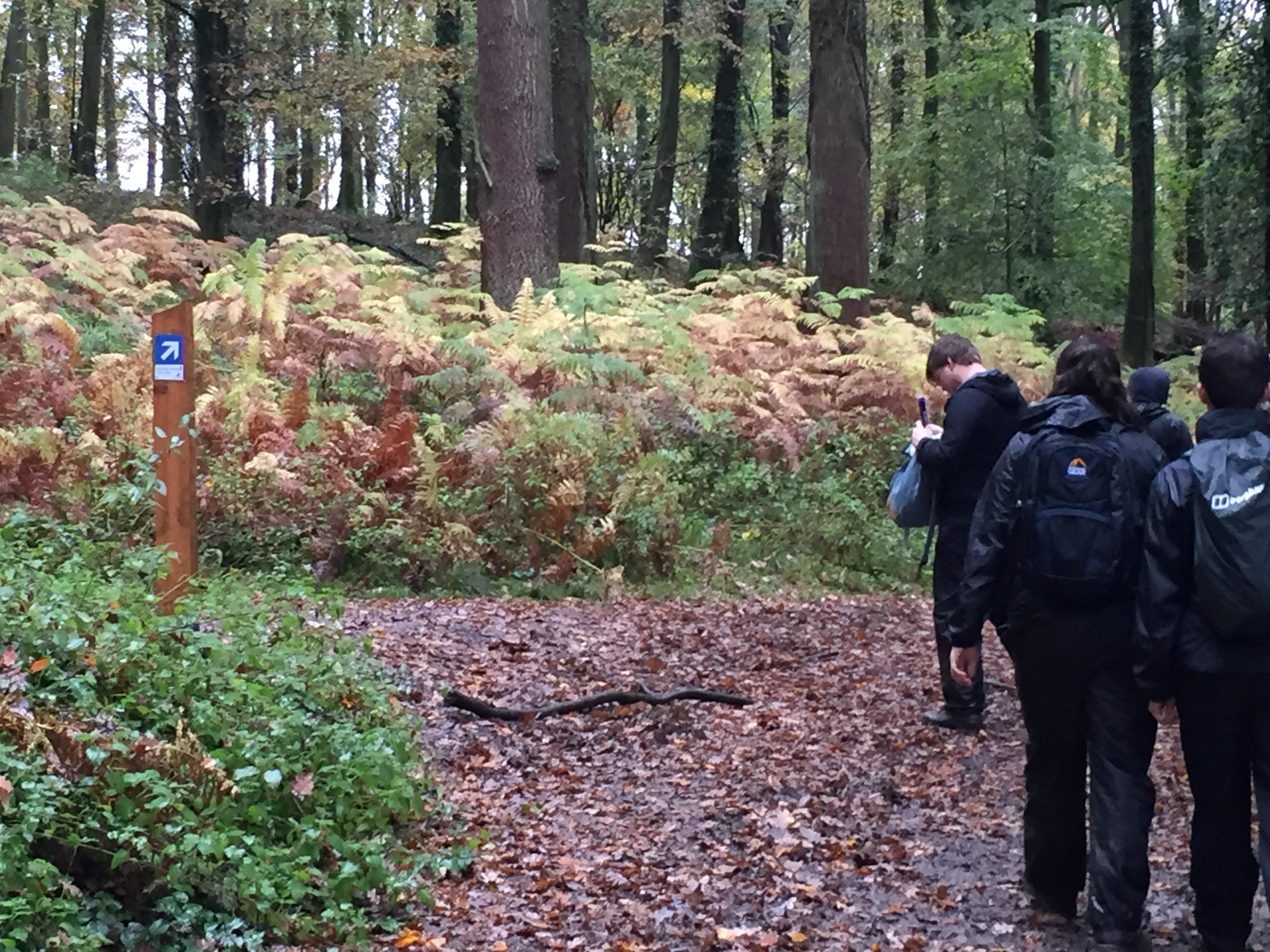 Woodland Challenge