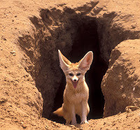 Foxes Have Holes