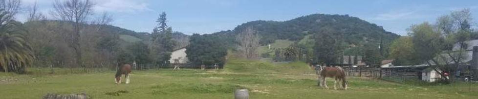field in spring no apts.jpg