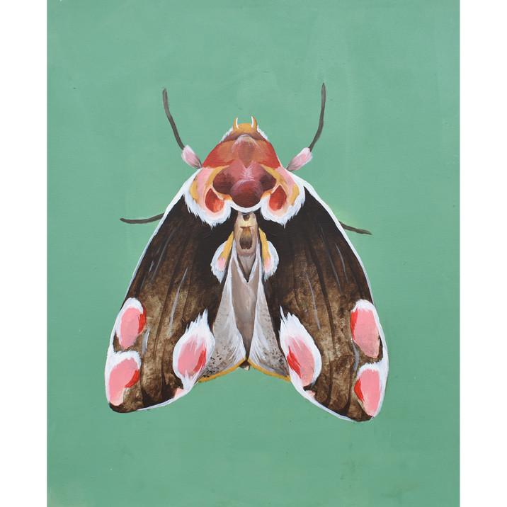 Moth Lady One