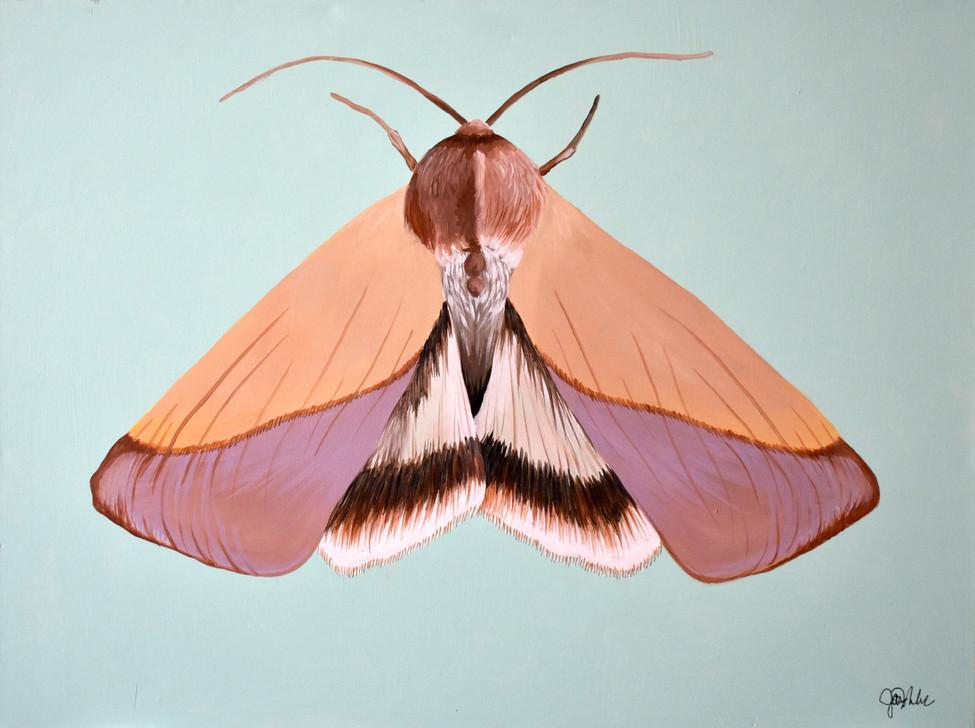 Moth Lady 1.1