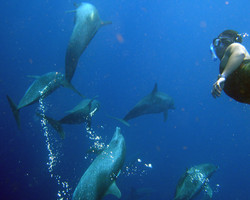 Dolphins PR