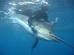 Spearfishing Puerto Rico (Rob)