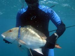 Spearfishing reef trips