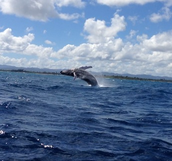 Whale Watching PR
