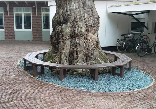 Sezení, lavice do kruhu, individuální řešení, sezení kolem stromu.