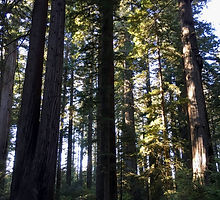 Restoration Forestry