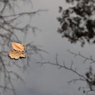 Leaves III (2019)