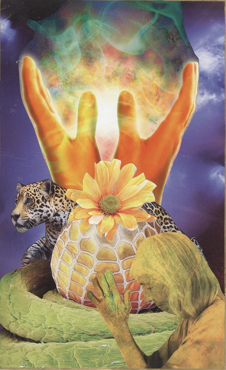 Magical Seed