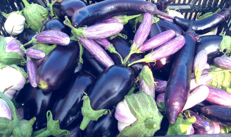 Colorful assorted eggplant