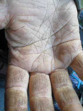 Hardworking farm hands