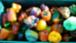 Bell Peppers - mixed colors.jpg