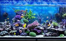 aquario-projetos-4.jpeg