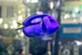 Peixe-agua-salgada-pagina_editado.jpg