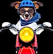 Cachorro moto transp 2.png