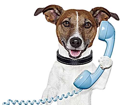 CãoNoTelefone.jpg