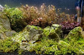 aquario-plantado.png