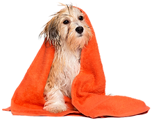 Cachorro toalha 1 transp.png