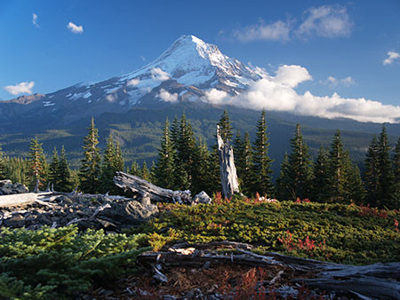 Mt. Hood in background with clear skies and vegetation in foreground