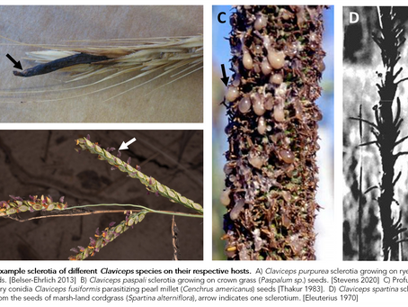 A proposed phylogenetic history of Ergot: the Claviceps species complex through time