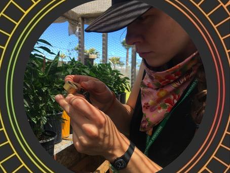 Understanding Entheogens Podcast #5 - Lydia Abernethy