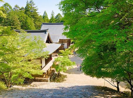 Pohon Maple Hijau di Kuil Jingo-ji