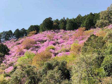 Pohon Mitsuba di Saimyoji