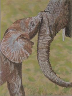 Maternité - Eléphant