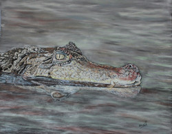 croco - pastel sec 40x50cm