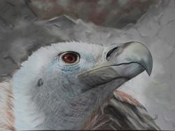vautour fauve - pastel sec - 40x50cm