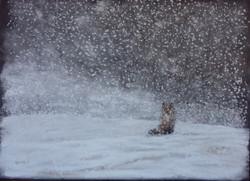 sous la neige - renard 30x40 cm