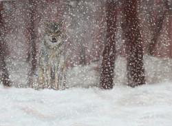 Loup sous la neige - pastel sec