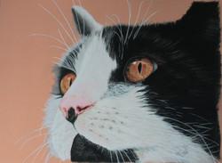 Le chat de ma voisine d'exposition