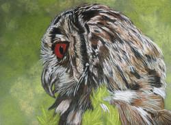 Grand-Duc - hibou