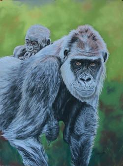 Gorille et petit - pastel sec