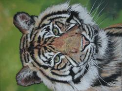 Tigre - pastel sec