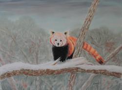 Panda roux - pastel sec