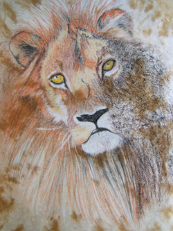 Regard - Lion