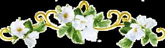 FlowerTop.png