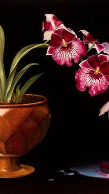 Narcisus 20' x 22' - oil on koa