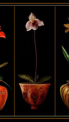 Orchids Suite 32' x 72 - oil on koa