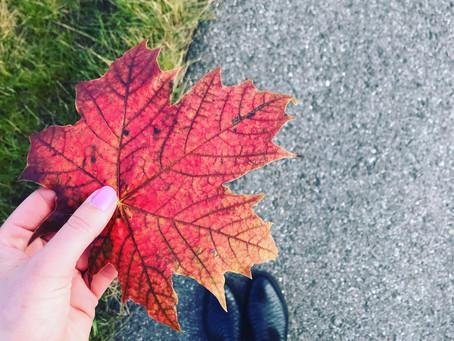 Vigtig og dejlig efterårssnak