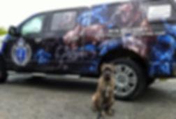 Cane Corso, Cane Corso puppy, Blue Brindle Cane Corso