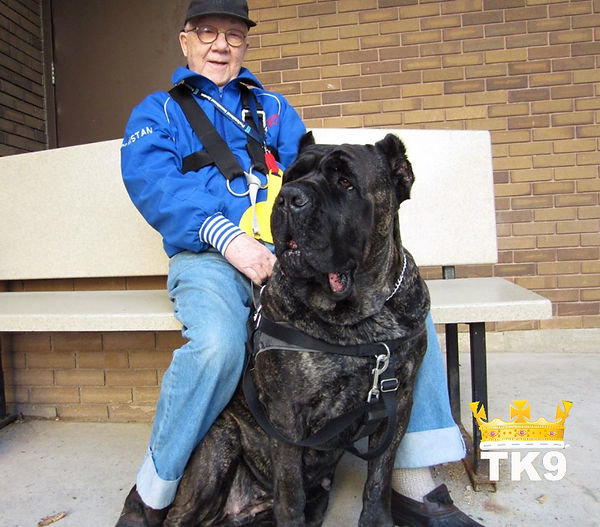 Cane Corso and 80 year old owner