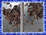 RoachesWindow.jpg
