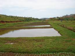 Earthen Ponds