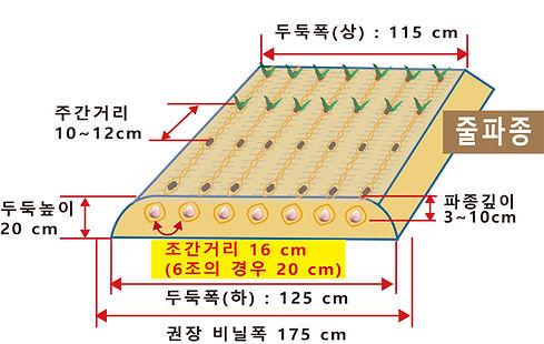 마늘_두둑형태_20190106.jpg