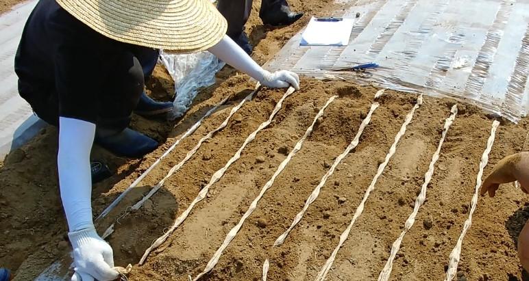 마늘파종기·마늘종자부착기 농업기술 실용화 재단 종합검정 통과