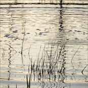 Pond Abstract